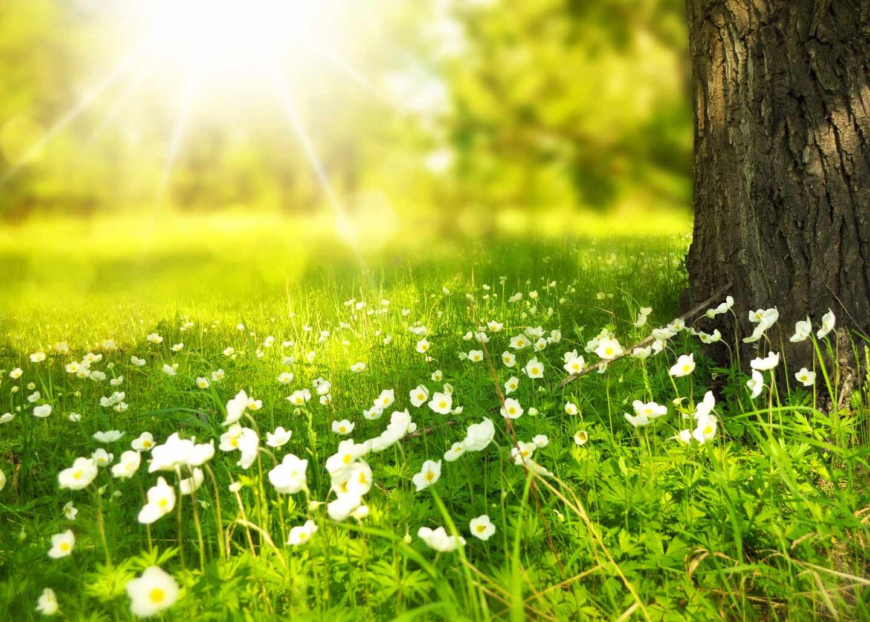 Garten Wiese Sonne Baum